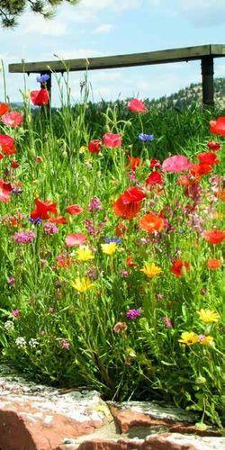 Brise vue d coratif pour le jardin tenue d 39 jardin for Decoration jardin rouge