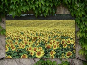 D coration pour le jardin terrasse sticker brise vue for Decorer un mur exterieur